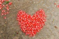 Serce robić od czerwonego kwiatu na ziemi zdjęcie stock