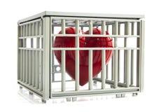 serce w klatce Fotografia Royalty Free