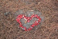 Serce wykłada z czerwonymi kamieniami Zdjęcia Royalty Free