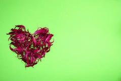 Serce wysuszeni czerwoni kwiaty Obraz Royalty Free