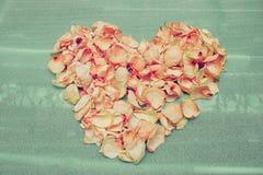 Serce wysuszeni różani płatki na zielenieje piankową futrówkę Obraz Stock