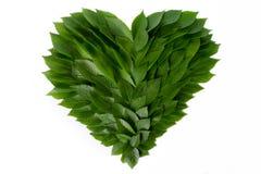 Serce zieleni liście Pojęcie miłość natura i gacenie Obrazy Royalty Free