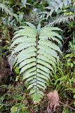Sercowate gałąź w drewno tropikalnym lesie deszczowym obrazy royalty free
