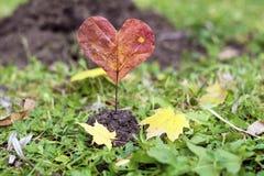 Sercowaty czerwony jesień urlop pocałunek miłości człowieka koncepcja kobieta Obraz Royalty Free