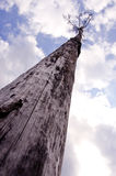 Sere old tree reaching cloudy sky   death concept Stock Image