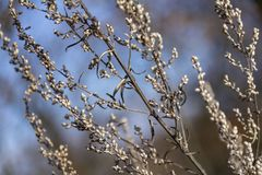 Sere plant detail. Full frame sere plant detail at autumn time royalty free stock photo