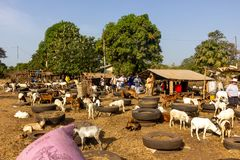 Tourists at goat market in Gambia stock image