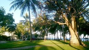 Trees on the beach in Kenya. Serena beach and spa in Mombasa Kenya Stock Photo