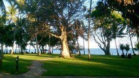 Serena beach trees Mombasa in Kanya. Serena green beach at Indian Ocean on the beach in Mombasa Kanya Royalty Free Stock Photos