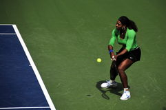 Serena Williams Royalty Free Stock Photo