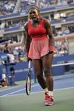 Serena Williams-kampioen de V.S. 2013 (5) Royalty-vrije Stock Afbeelding
