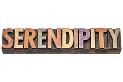 Serendipity word in wood type. Serendipity - an aptitude for making desirable discoveries by accident, isolated word in vintage letterpress wood type royalty free stock images