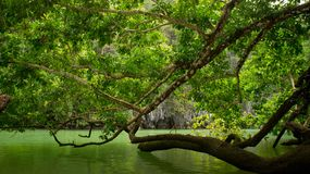 Trees by the water royalty free stock images