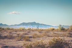 Serene Arizona ökenlandskap Royaltyfri Fotografi