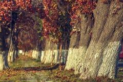 Serene autumn landscape Stock Photography