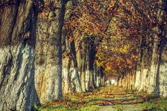 Serene autumn landscape Royalty Free Stock Images