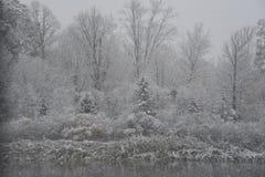 Serene Autumn Snowfall stock foto's