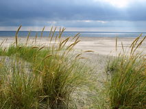 Sand dunes on a beach royalty free stock photo
