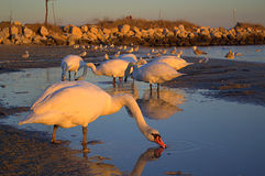 Serene beach birds Royalty Free Stock Photos