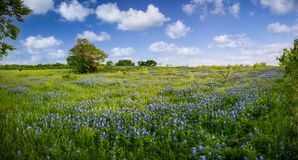 Free Serene Bluebonnet-filled Pasture In Rural North Texas Stock Photo - 217559360