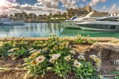 Central marina in Eilat, Israel. Serene day at central marina in Eilat-famous resort city in Israel, famous place for tourism, travel and blissing vacation Royalty Free Stock Photography