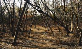 Serene Deserted Path imagem de stock royalty free