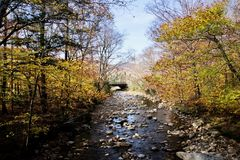 Serene Fall Foliage royalty-vrije stock afbeelding