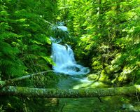 Serene falls. A serene waterfall near the grove of the Patriarches Mount Rainer National park Stock Images