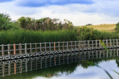 Serene floating boardwalk against reeds, hills and a blue sky Stock Photos