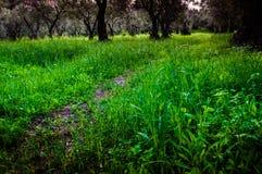 Serene Forest Environment Stock Image