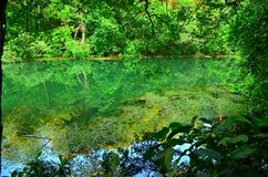 Serene Forest l Immagine Stock