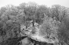 Serene Frozen Forest Fotografia Stock