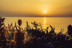 Serene golden sunset over the sea with the wild flowers Royalty Free Stock Photos