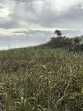 Serene Green Beauty della spiaggia nazionale U di Canaveral S National Park Service Fotografia Stock Libera da Diritti