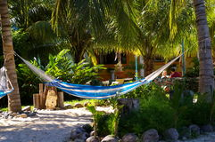 Serene Hammock. Hammock swinging in tropical setting Royalty Free Stock Photos
