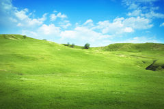 Serene hilly meadow Royalty Free Stock Image