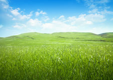Serene hilly meadow Stock Photo