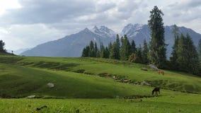 Serene Himalayas Stockfotos