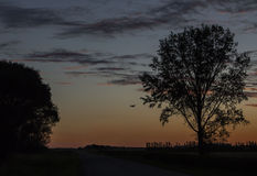 Serene image of a plane flying in the distance under a beautiful sunset surrounded by trees. Stock Photography