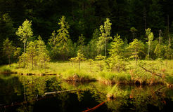 Serene lake in forest. With dark deep water Stock Photography