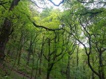 Serene Landscape del parco Fotografie Stock Libere da Diritti