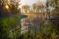Serene misty morning on a lakeside stock images