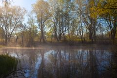 Serene misty morning on a lakeside. Summer Royalty Free Stock Photo