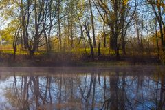 Serene misty morning on a lakeside Royalty Free Stock Image