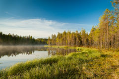 Serene morning at forest pond Stock Photography