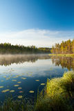 Serene morning at forest pond Royalty Free Stock Image
