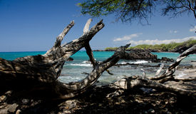 Serene morning at Puako beach Stock Photos