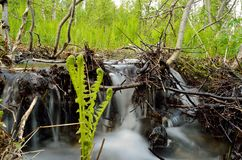 Serene mountain stream in lush green nature.  Stock Image