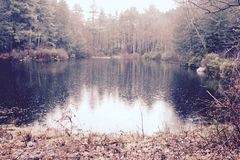 Serene. And mysterious lake within a dense forest Stock Photos