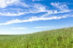 Serene Nature landscape of the midwest Kansas Tall. This serene and beautiful pasture landscape of the midwest tallgrass prairie with the undulating hills, lone royalty free stock image